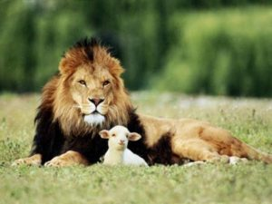 Lion and a Lamb